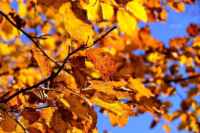 Ploteczkarnia jesiennie…