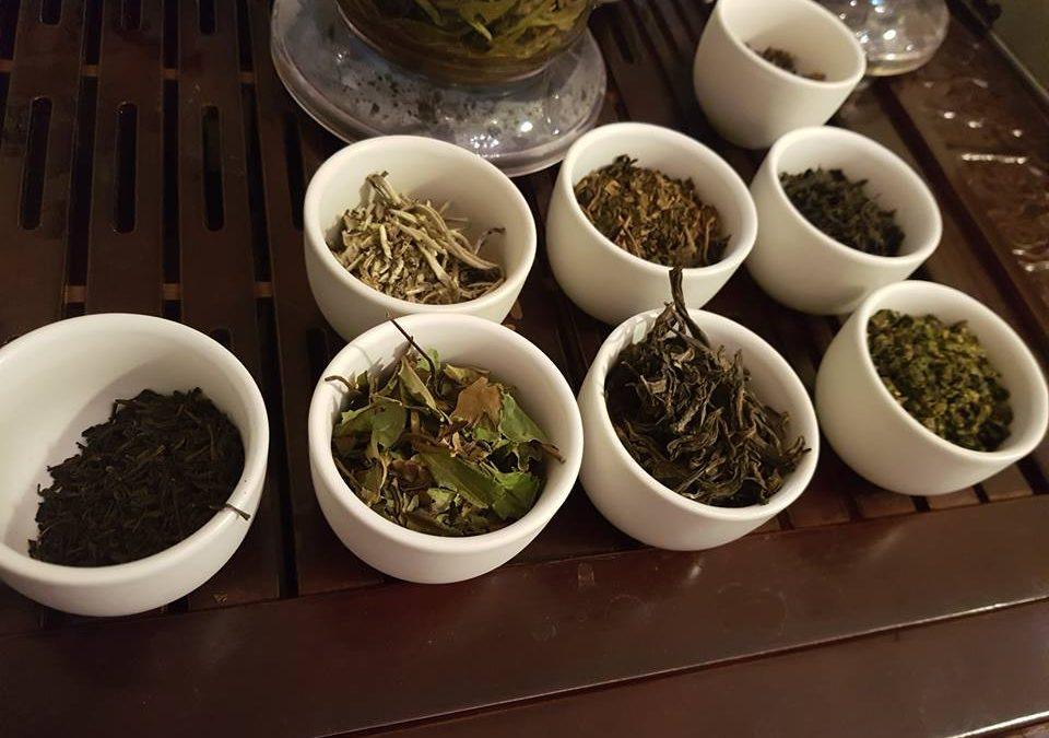 Warsztaty herbaciane -YERBA MATE
